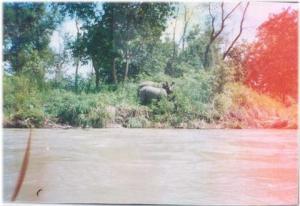 Rhinos,