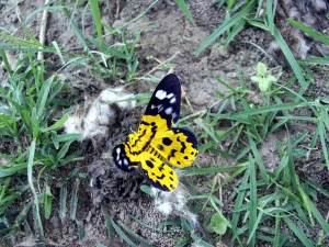 Yellow Buautiful butterfly