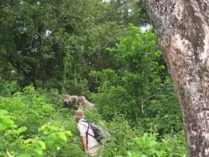 Asianl wild elephant,