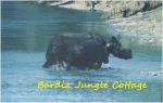 a rhino with baby crossing the river in winter
