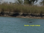 Gangetic Dolphin in Karnali River, come and see fresh water dolphin