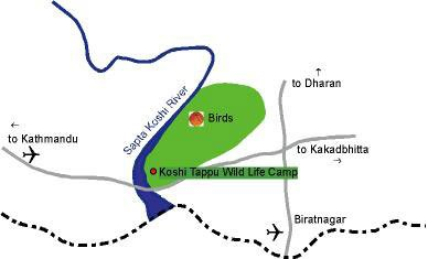 ... January 8, 2010 at 388 × 235 in Koshi Tappu Wildlife Reserve